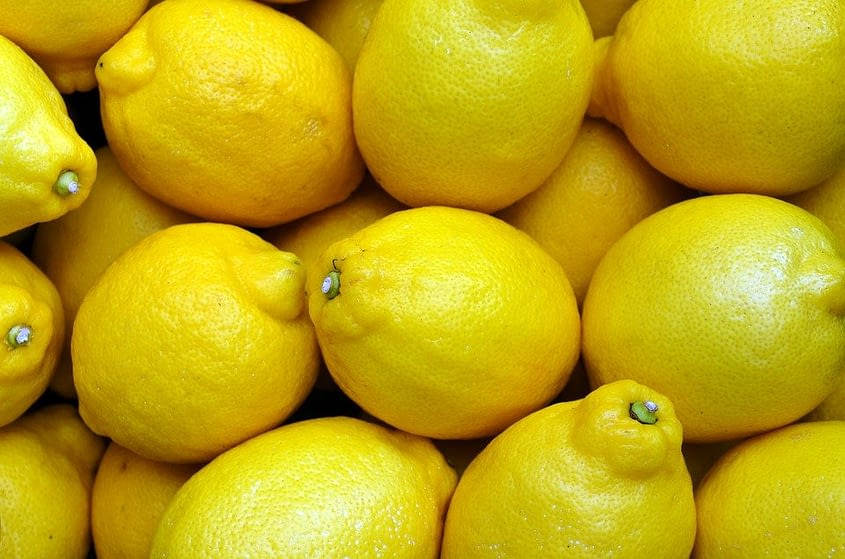 How To Begin Lemon Farming In South Africa   A Working Guide